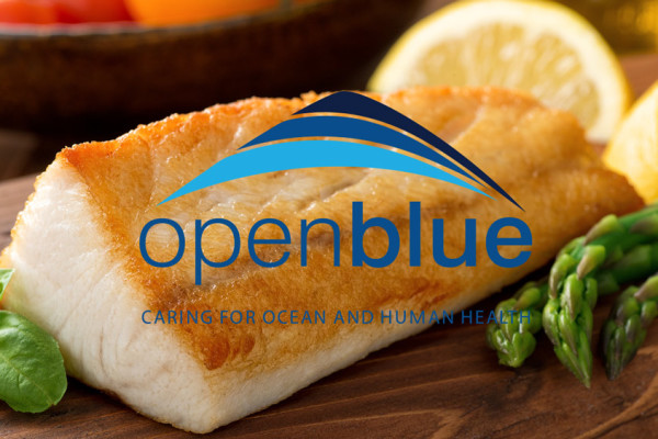 cobia-cookoff-open-blue