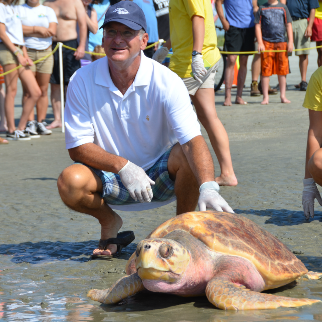 ©South Carolina Aquarium Sea Turtle Rescue Program Sea Turtle Release June 30 2016 Lady (22)